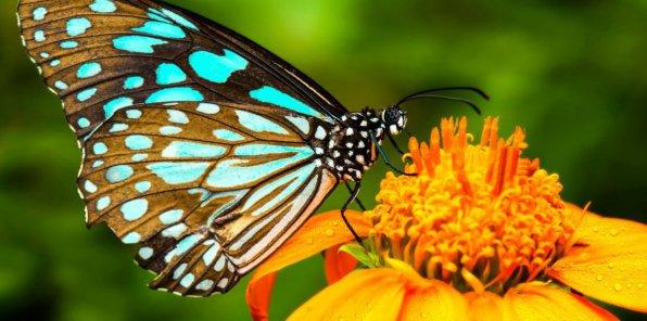 -50% на выставку тропических бабочек «Тропикариум»