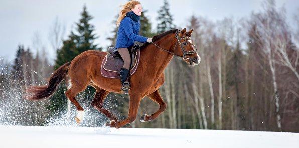 -50% на конную прогулку по Шуваловскому парку